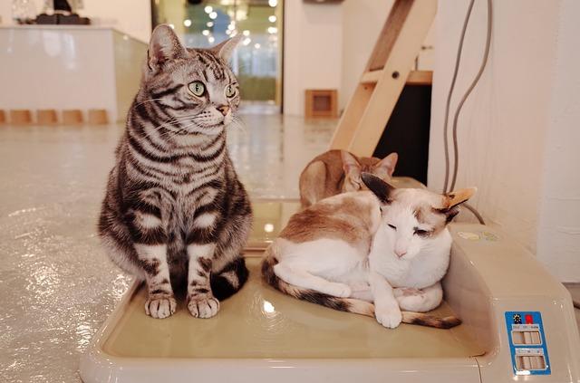 zwierzęta u weterynarza