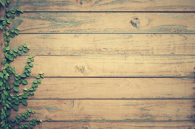 szkodniki w drewnie